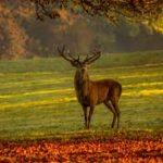 deer 2